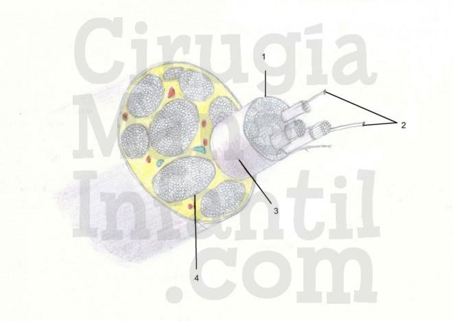 Figura-7-PBO.jpg